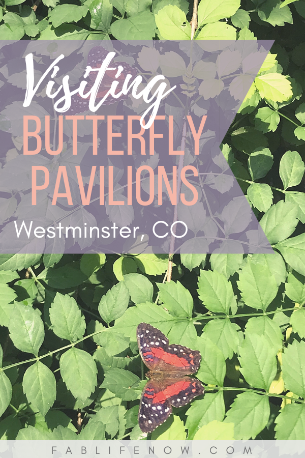 Butterfly Pavilion Denver, Westminster, Colorado | Best places to visit in Denver | To Do in Denver with kids | Affordable things to do in denver