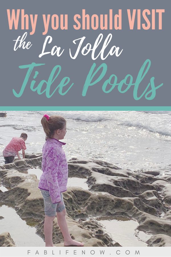 why you should visit la jolla tide pools, best beaches in la jolla, best beaches in san diego, best beaches for kids