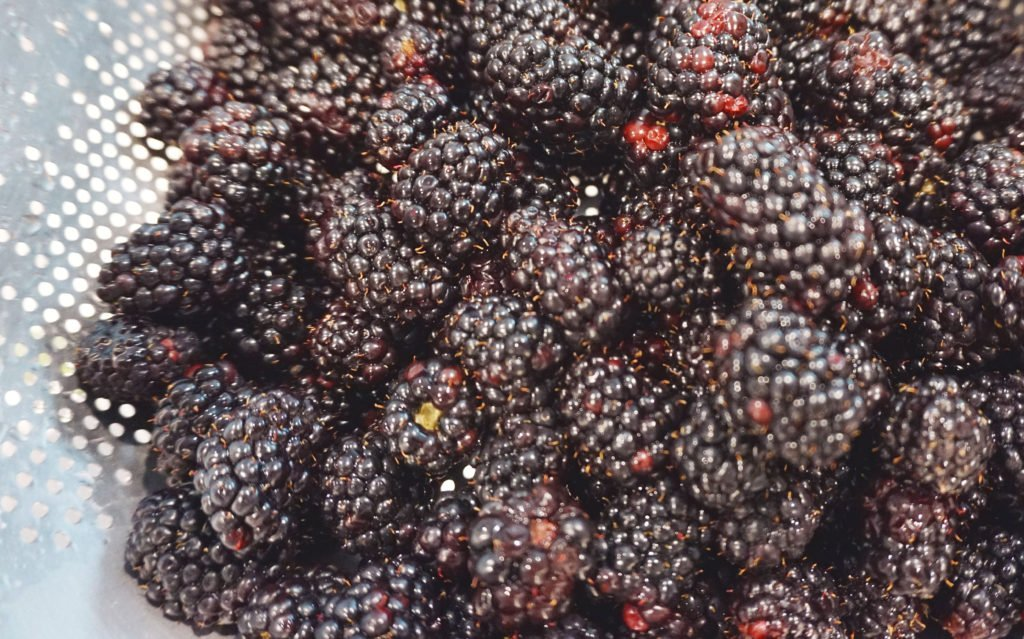 rinsing blackberries to use and freeze after picking your own at a you pick farm