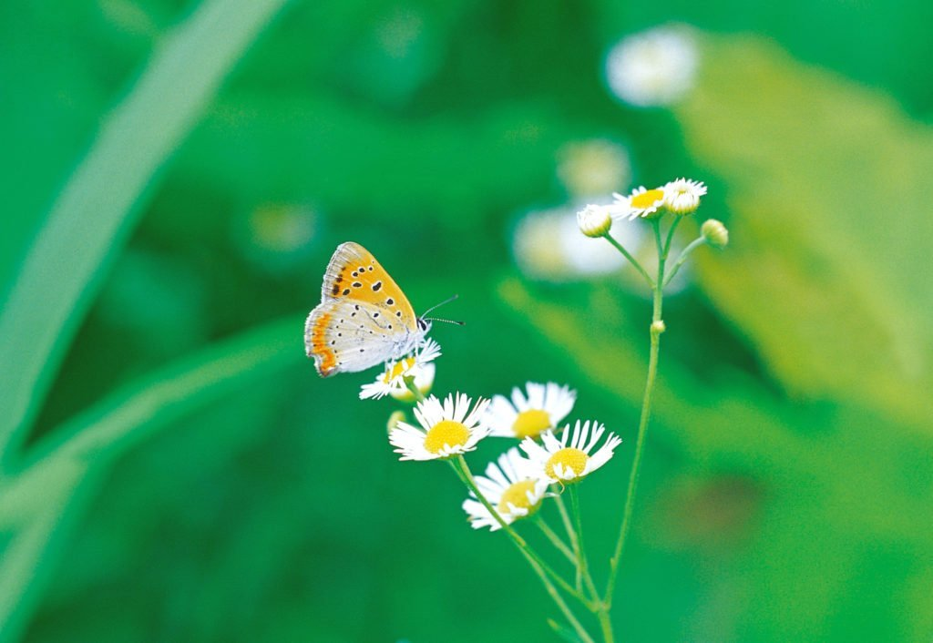 the beauty of nature like a butterfly and flowers fill me with hope