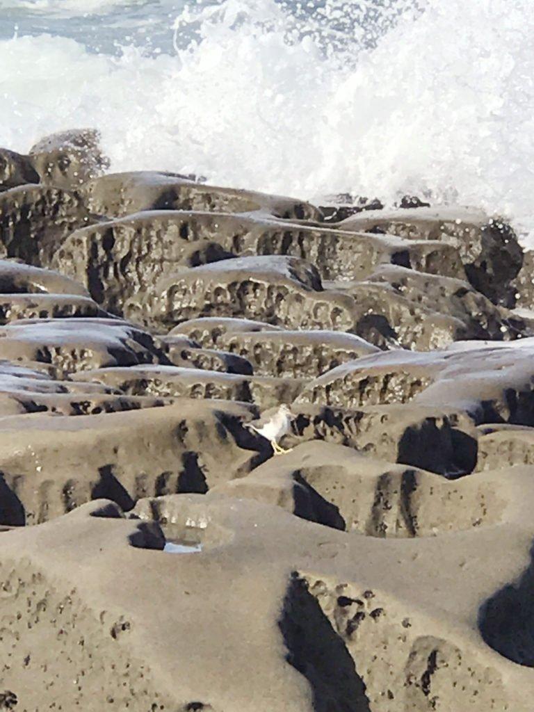 la jolla tide pools, san diego, sea life in tide pools, explore sand diego
