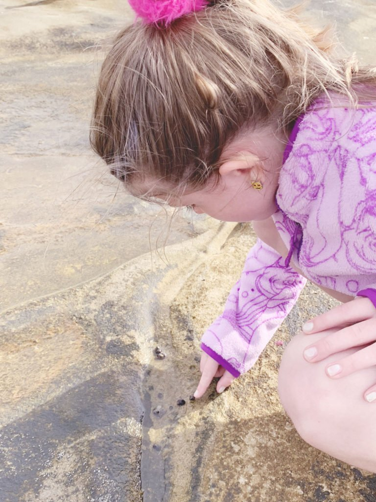 finding creatures in the tide pools in la jolla san diego, tide pools wildlife